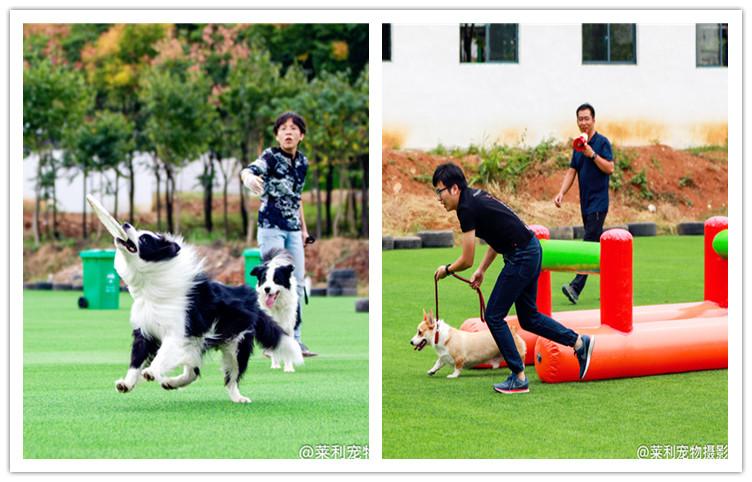 武汉宠物游玩基地3.jpg