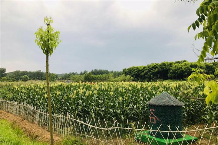 武汉乐农湖畔农庄采摘4.jpg