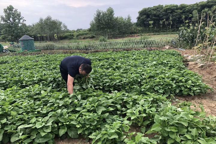 武汉乐农湖畔农庄采摘6.jpg