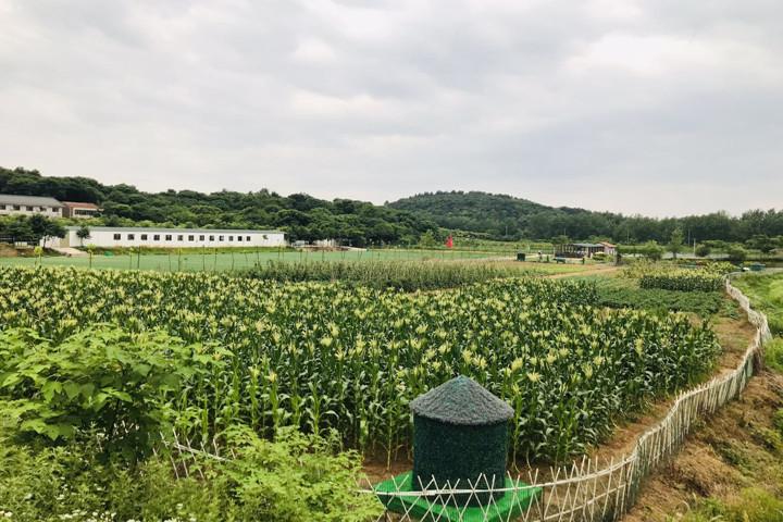 武汉周边农家乐一日游3.jpg